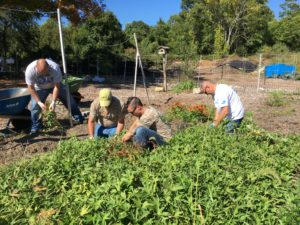 giving-garden-6-tons2
